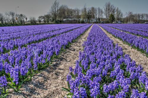 Anton van Overveld: Landschappen