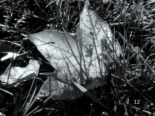 Foto 12 zwart wit
