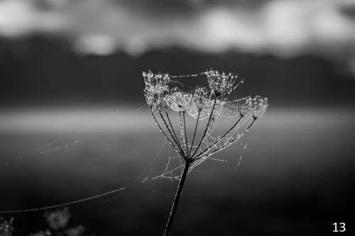 Foto 13 zwart wit