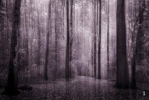 Foto 1 zwart wit