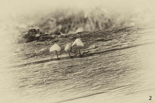 Foto 2 zwart wit