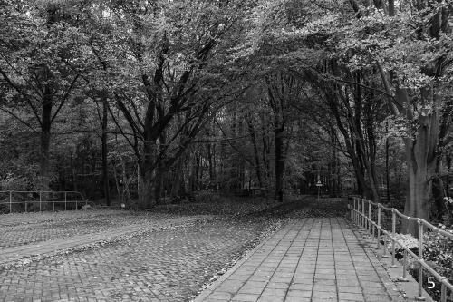 Foto 5 zwart wit