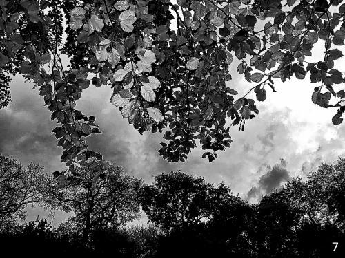 Foto 7 zwart wit