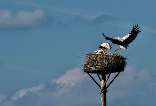 Ria Scheewe: Vogels