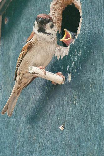 Jaap Aartman: Vogels
